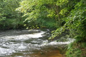 Rando âne :La Cure après le Lac des Settons