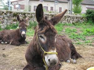 Rando âne : un repos bien mérité