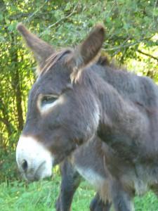 les ânes et nous 026